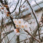 春 ❁* だね~ ♪
