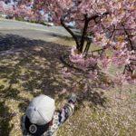 湊川の河津桜🌸