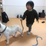 友人宅へ🏡犬に慣れすぎた息子👦🏻