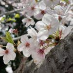 春ですね~🌸* 4月スタート !!